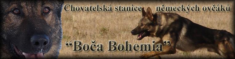 Boča Bohemia